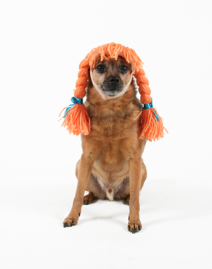 dog wig