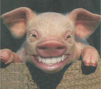 Gripe Porcina 2