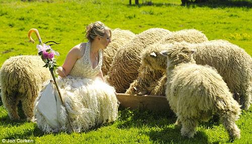 rebaño y novia-pastora