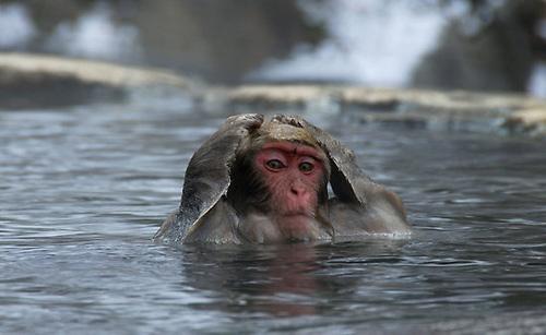 mono-agua