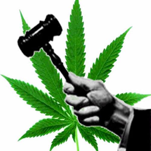 5161-JudgeMarijuana