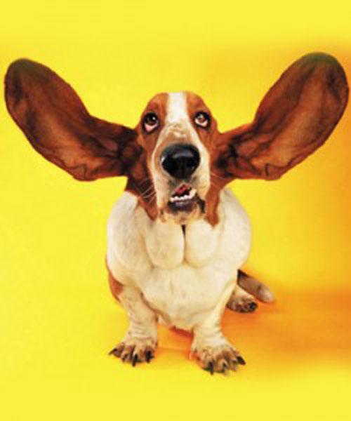 oidos-perro-250x300