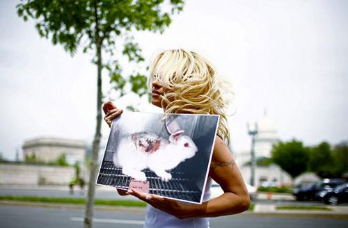 Pamela-Anderson-PETA