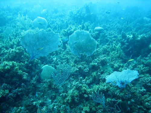 Imagen de las algas azules