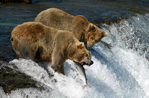 la-caza-del-salmon