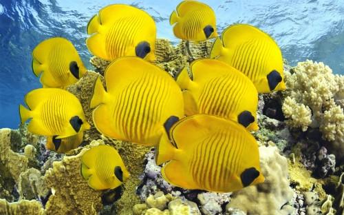 yellow-yellow-249239