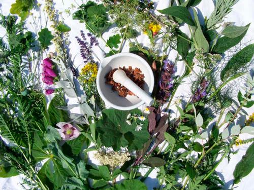 mejores-plantas-medicinales
