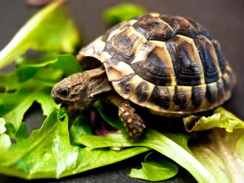 comer-despacio-peso-dieta