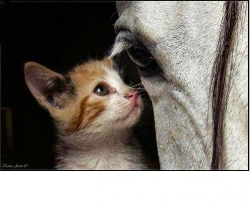 gato-y-caballo. JPG