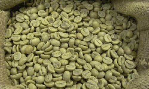 cafe-verde-adelgazante