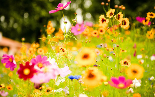 mascarilla-flores-luminosas-loccitane-contorno-ojos