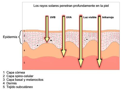 rayos-uva-uvb-infrarrojos-piel
