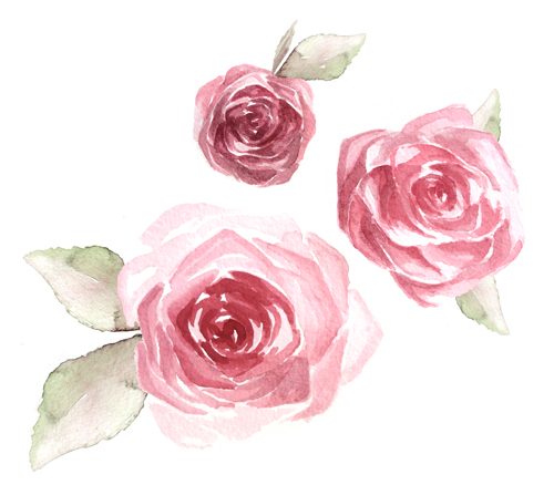 wild rose latin singles Rosa acicularis, also known as the prickly wild rose, the prickly rose, the bristly rose, the wild rose and the arctic rose, is a species of wild rose with a.