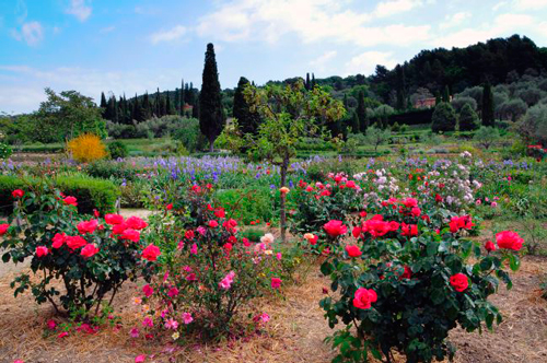 jardines-museo-internacional-perfumeria-grasse-rosas
