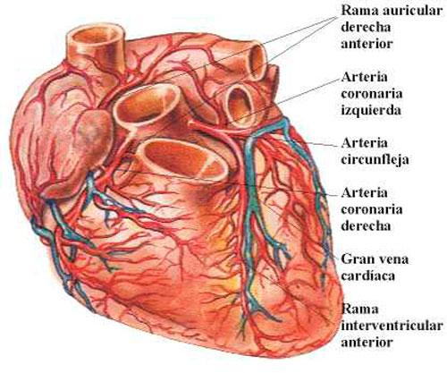 corazón salud