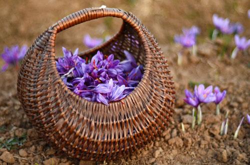 azafran-propiedades-medicinales