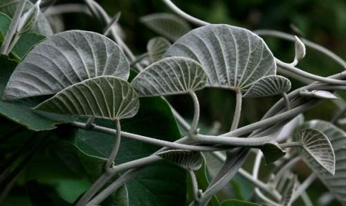 sorteo plantas medicinales arkopharma