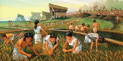 agricultura-neolitico