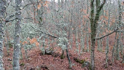 la-granja-bosque-