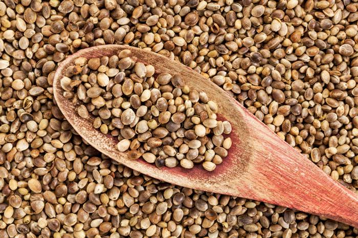semillas-canamo-propiedades-cannabis-marihuana