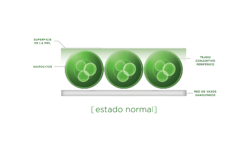tejido-conjuntivo-periférico---estado-normal