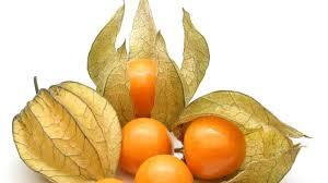 fruta uchuva pshysalis y alquequenje