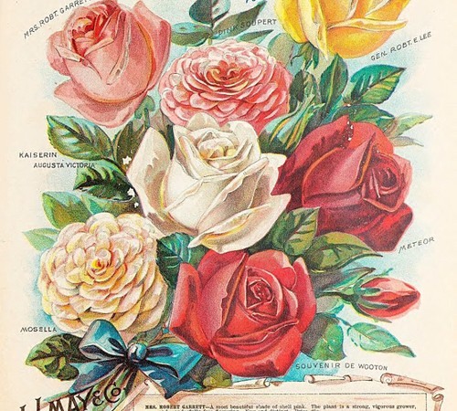 rosas perfumes