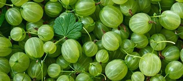 amla-verde-nutraceutico