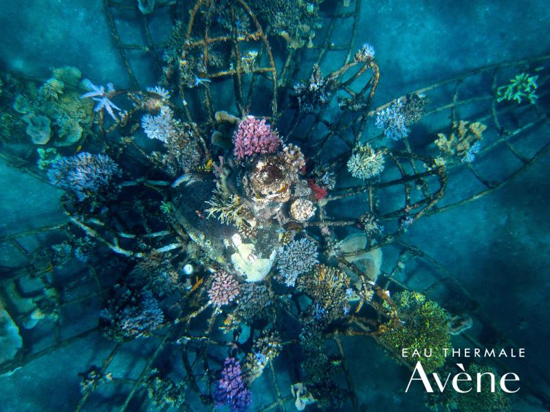 corales océanos