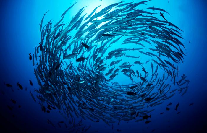 dia-de-los-oceanos-la-mer-national-geographic
