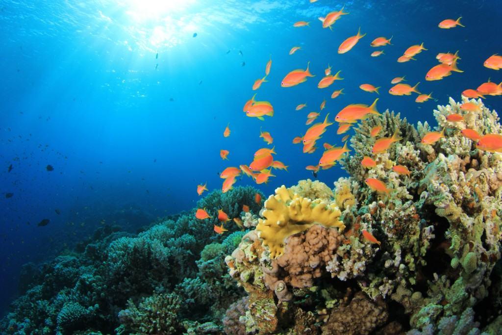 fondo de océanos