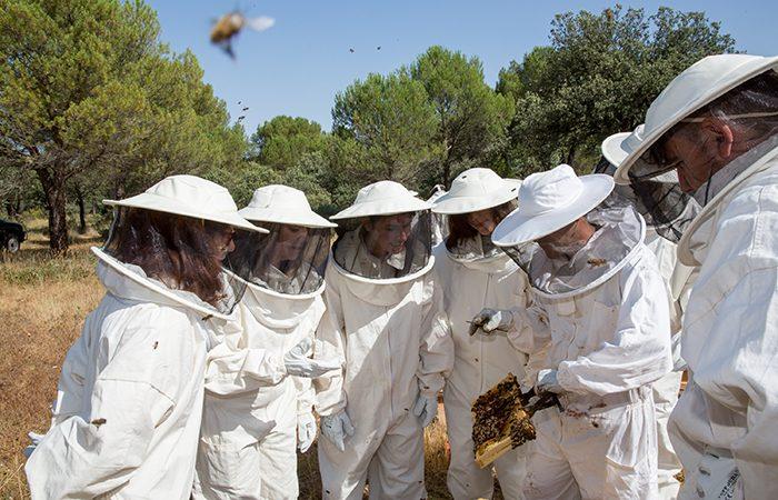 guerlain-miel-abejas-abeille-royalet