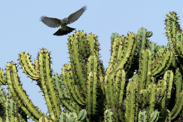 hidratantes-al-rico-cactus