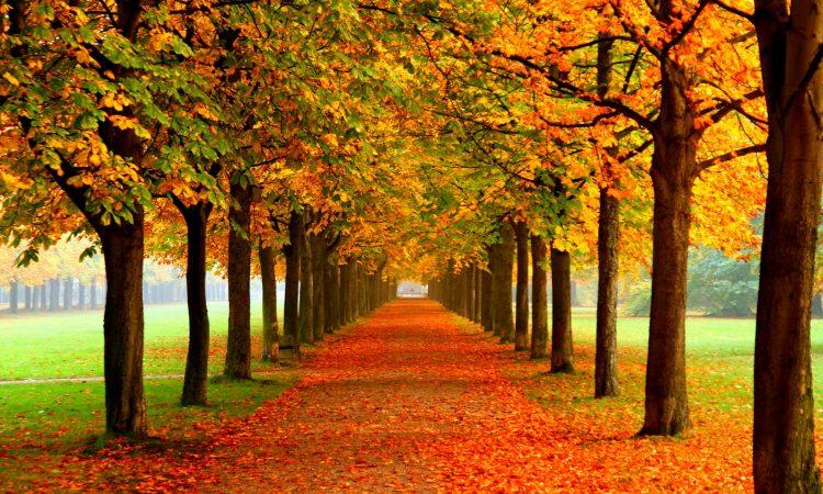 colores de otoño cromoterapia