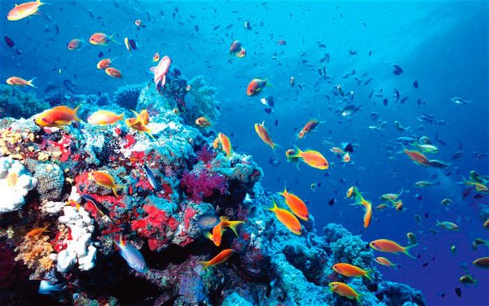 microplasticos-cosmetica-contaminacion-oceanos-greenpeace