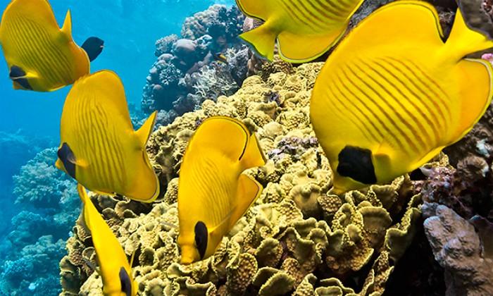 microplasticos-microperlas-cosmetica-contaminacion-oceanos
