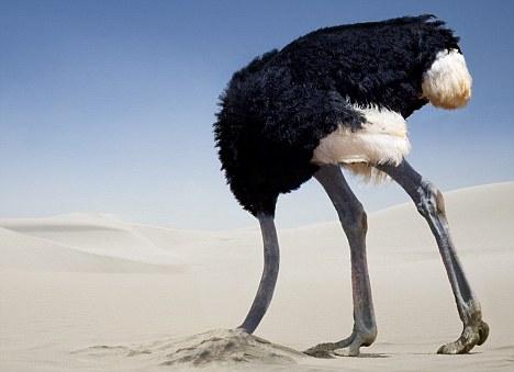 avestruz en la arena
