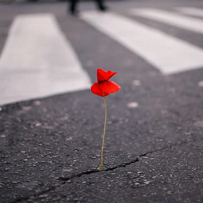 Flower Kenzo Dia De La Amapola