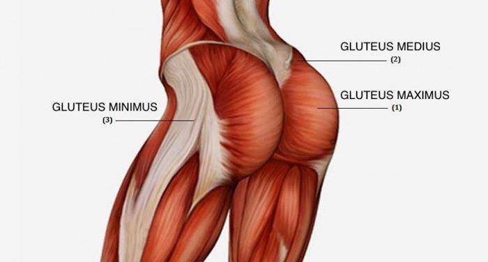 Anatomia Gluteo 710x381