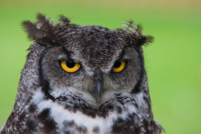 Owl Predator Prey (1)