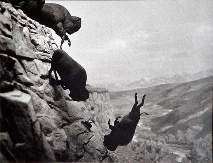 David Wojnarowicz Buffalos