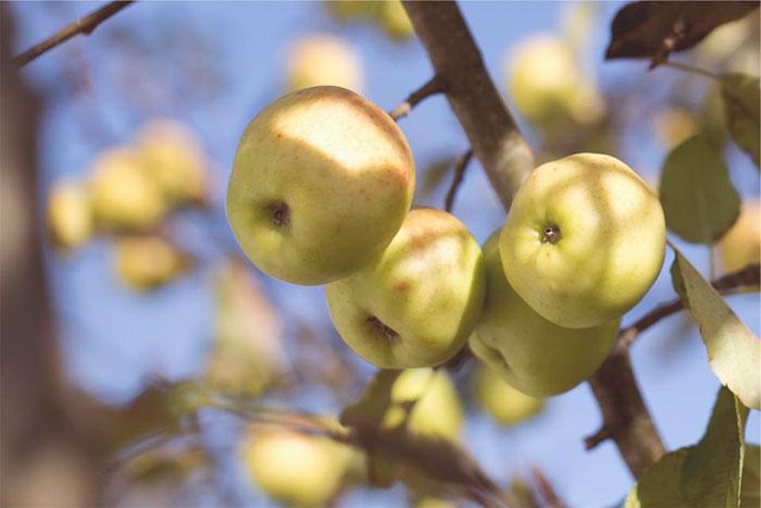 Frutas Contaminadas Disruptores Hormonales