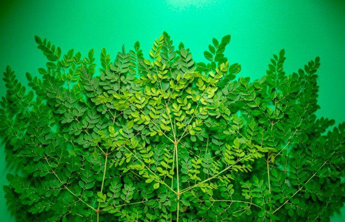 Moringa Cosmetica Ingrediente Anticontaminacion