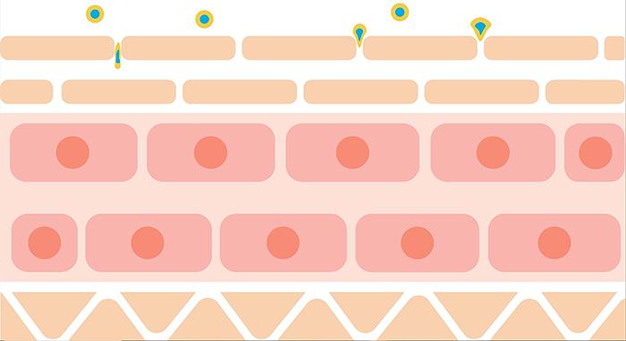 Liposomes Absorption1