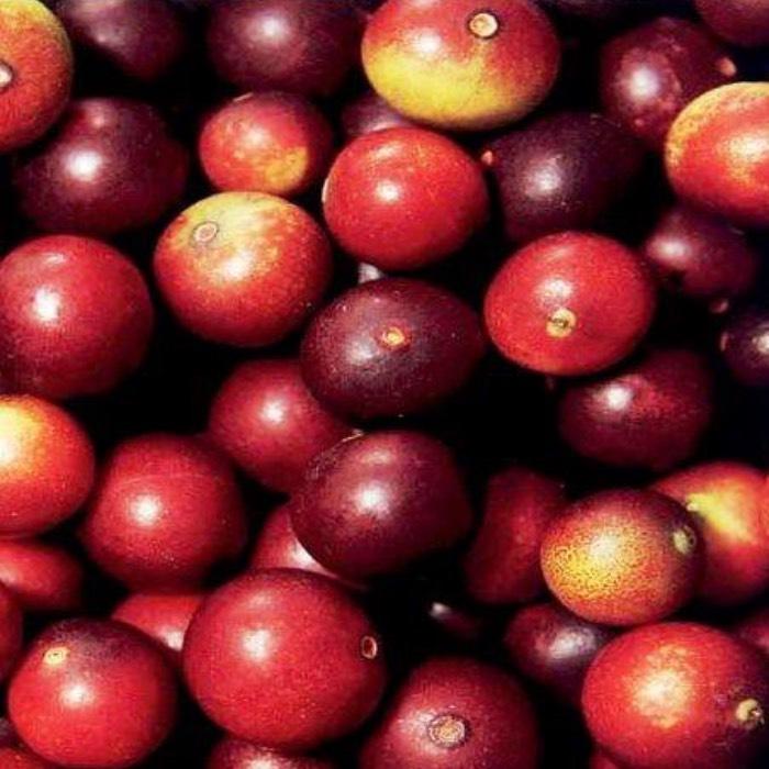 Camu Camu El Fruto Tropical Más Antioxidante