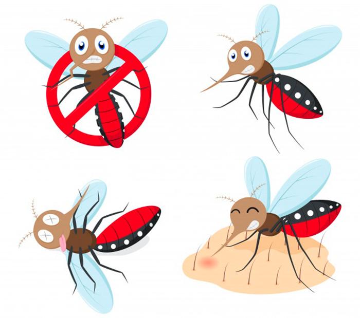 Conjunto Coleccion Dibujos Animados Mosquitos