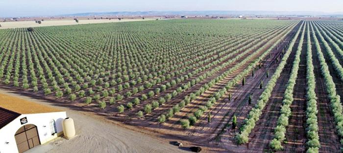 palacio de los olivos aceite campos de olivos