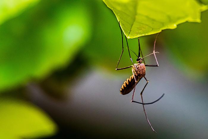 Camiseta Anti Picaduras Mosquitos