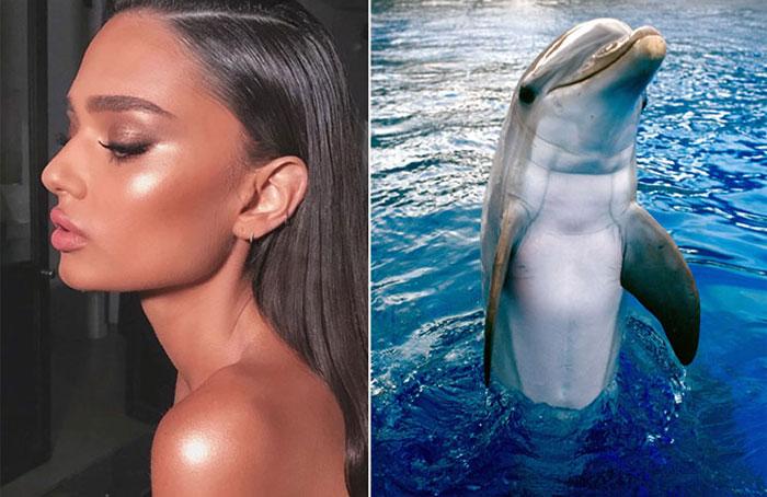 piel-delfin-2