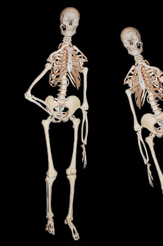 Skeleton 2294887 1280